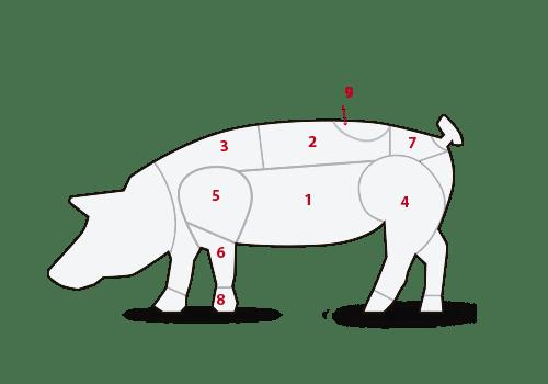 ilustración cortes cerdo