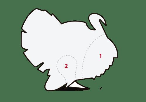 ilustración cortes pavo