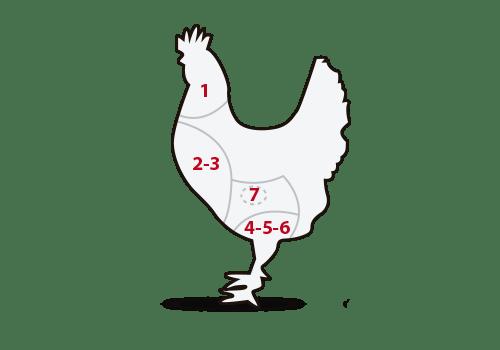 ilustración cortes pollo